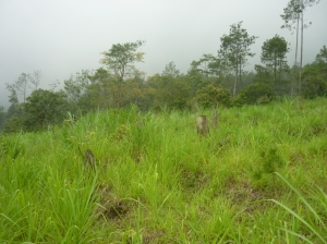 penebangan hutan tanpa disertai reboisasi
